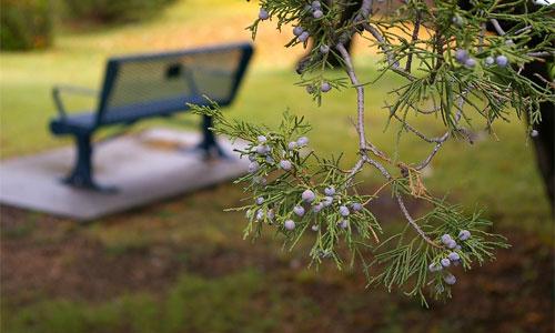 bench-park-summer-drew-simmie